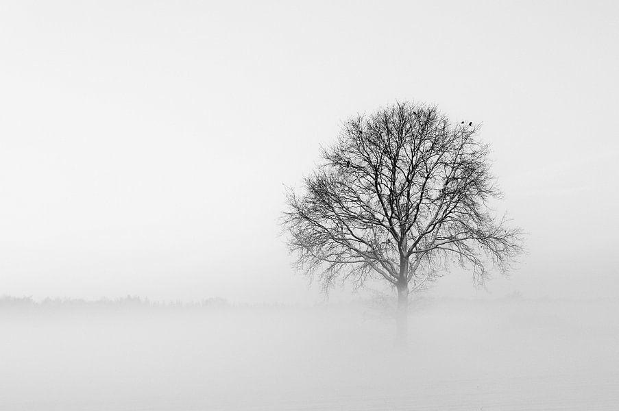 Met een been in de mist van Bas Wolfs