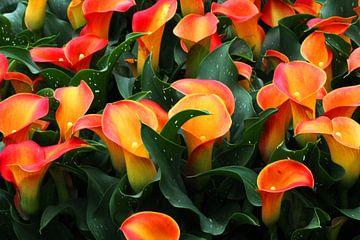 bloemen van Tatjana Korneeva