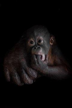 Ein süßer kleiner junger Orang-Utan Azyana schaut neugierig auf die eifrig unterstützte große Hand s von Michael Semenov