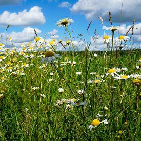 Wilde bloemen langs de weg van Wieland Teixeira