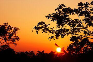 Dromerige Zonsondergang tussen de bomen door van Dexter Reijsmeijer