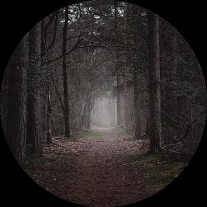 herfstkleuren in het bos van Jan Hermsen
