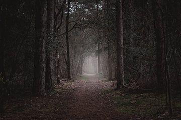 couleurs d'automne dans la forêt sur Jan Hermsen