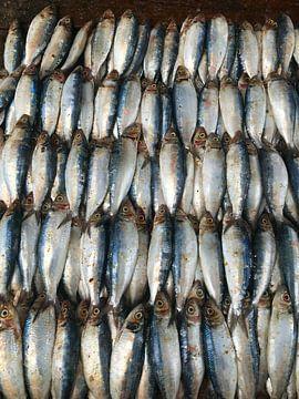 Fischfang auf dem Markt in Negombo, Sri Lanka