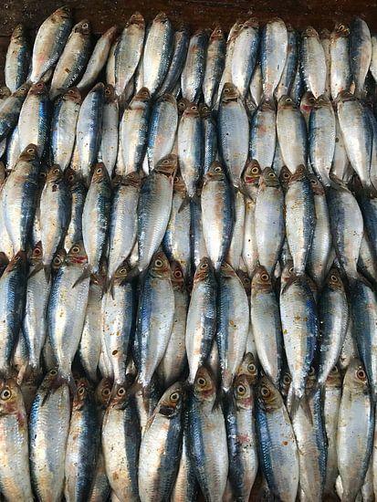 Vissen op de markt in Negombo, Sri Lanka