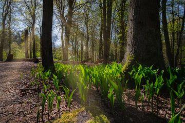 Jungpflanzen von Arno van der Poel