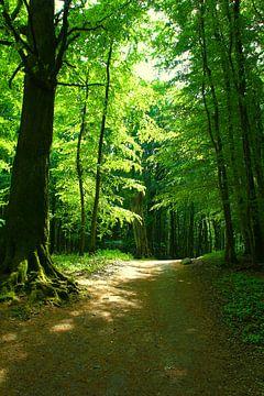 Waldlichtung von Ostsee Bilder