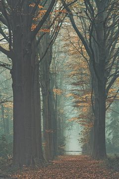 Bosdreef in herfstkleuren van Rik Verslype