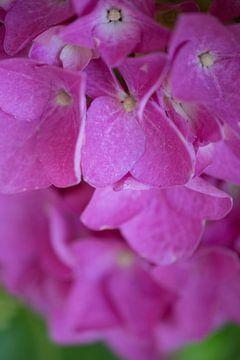 Paarse bloemen von Roosmarijn Jongstra