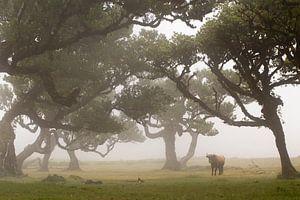 Sprookjesbos op Madeira island van