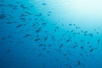 Onderwater scene Bonaire. V15BON06130158 van Vanessa Devolder