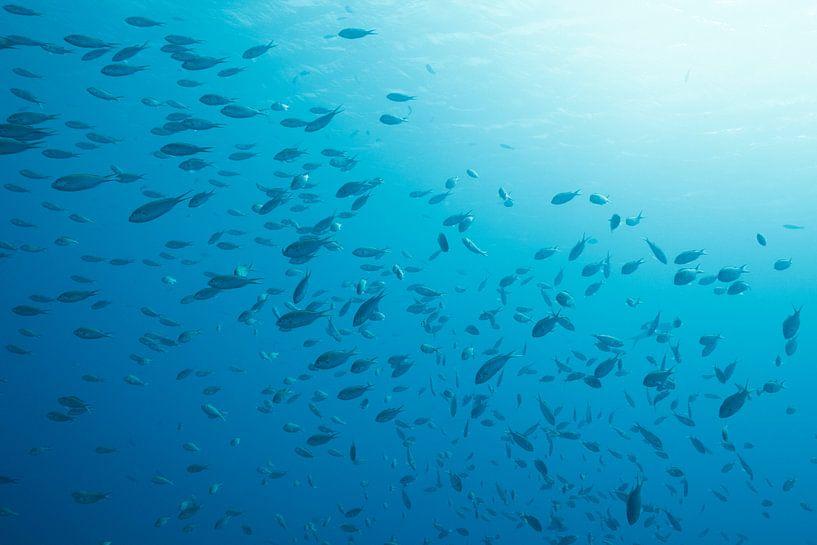 Onderwater  Bonaire. van Vanessa