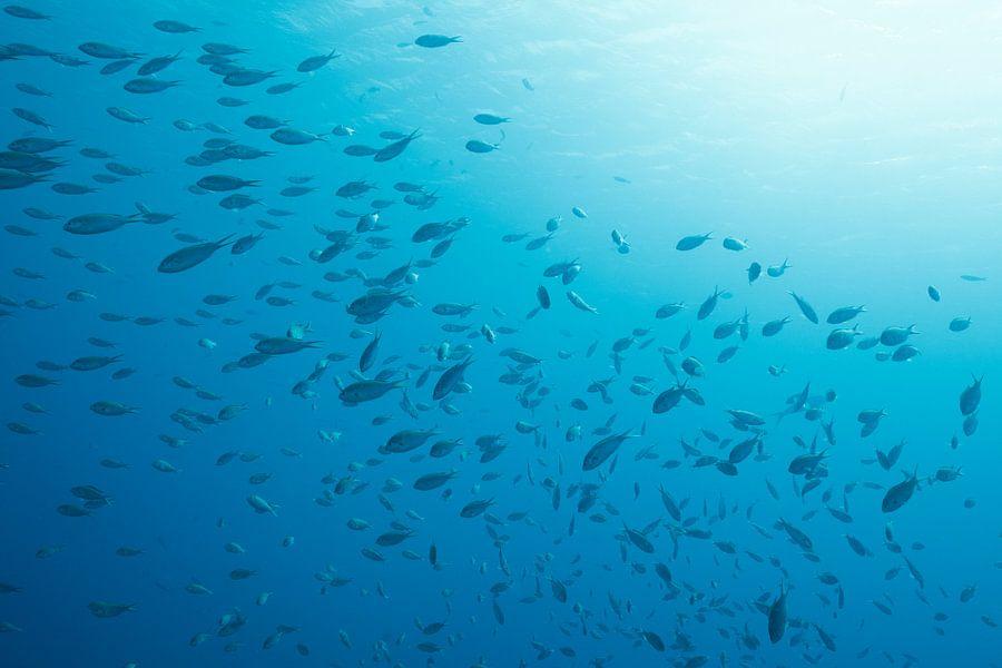 Underwater scene Bonaire. sur Vanessa Devolder