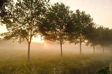 Bomenrij in ochtendmist van Johan Vanbockryck