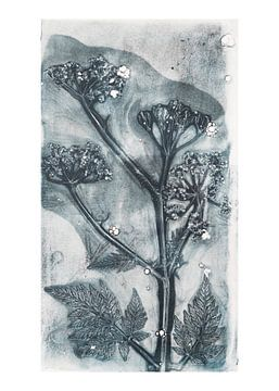 Botanische planten en bloemen afdruk Fluitenkruid van
