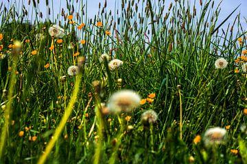 Wild bloemenveld van Michael Nägele