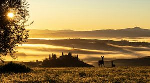 Herten in front of Podere Belvedere van Fotografie door Menno