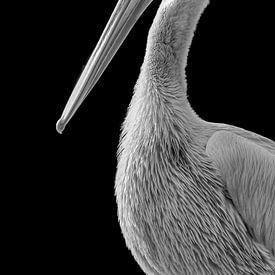 Pelikaan in zwart wit van Celina Dorrestein