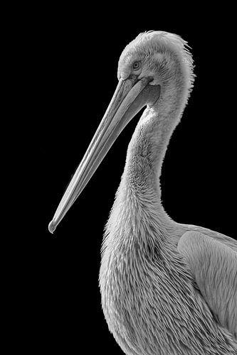 Pelikaan in zwart wit von Celina Dorrestein