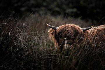 Verstecken und suchen mit Highlander von Marvin Van Haasen