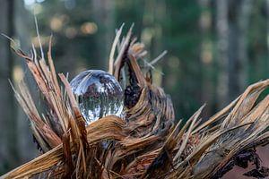 Glas in der Natur