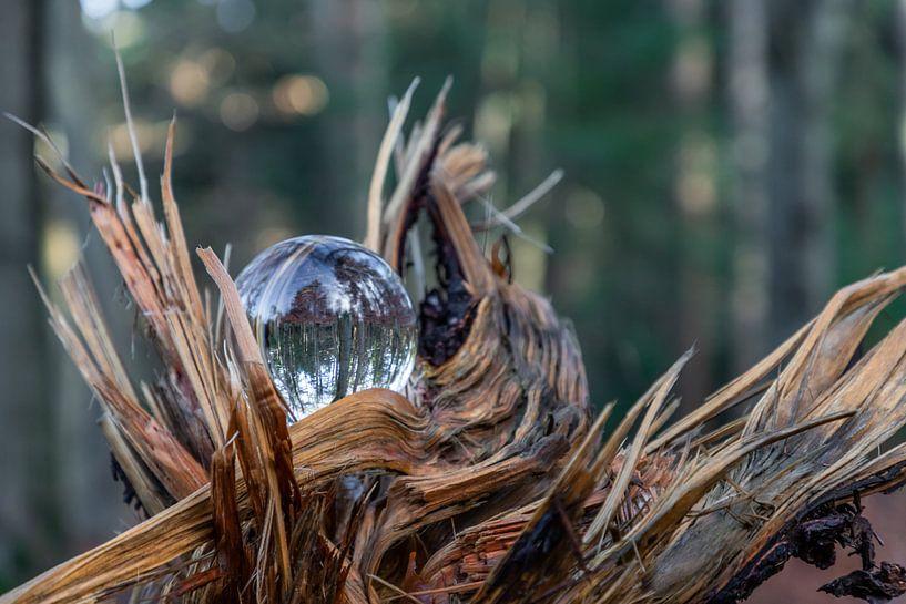 Glas in de natuur van Henry Nijen Twilhaar