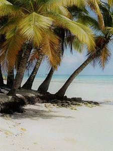 Dominicaanse Republiek Eiland Saona van