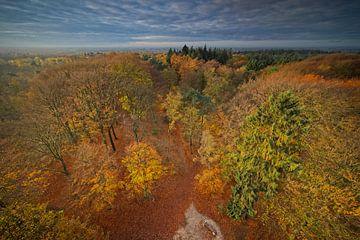 Utrechtse Heuvelrug im Herbst von Dirk-Jan Steehouwer