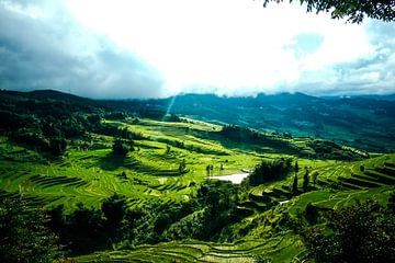 Groene rijstvelden in Yunan, China van André van Bel
