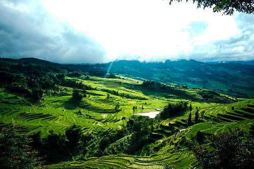Groene rijstvelden in Yunan, China
