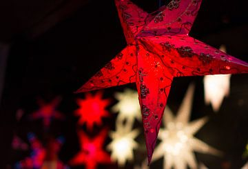 Weihnachtsstern rot von