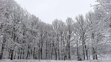 Winterwunderland von Dick Doorduin
