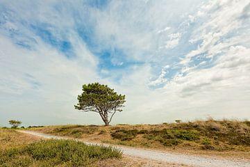 duinlandschap met een enkele naaldboom van eric van der eijk