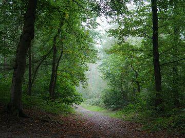 Der geheime Wald von Odette Kleeblatt