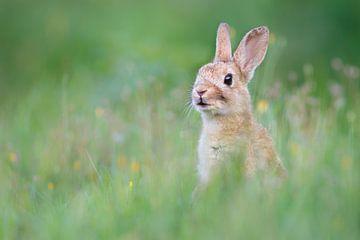 Schattig konijn van Pim Leijen