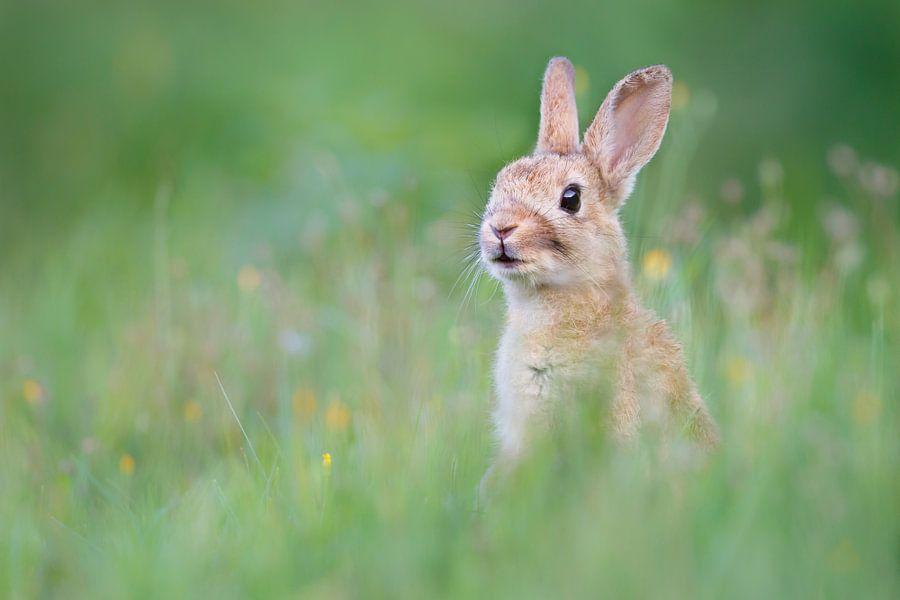 Schattig konijn