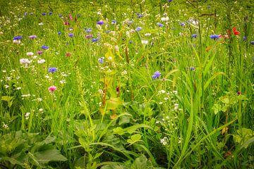 Wildblumen von eric van der eijk