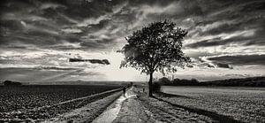 Herfst in Zwart Wit van
