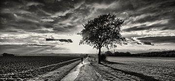 Herfst in Zwart Wit von Koen Lambooij