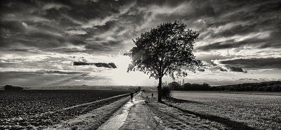 Herfst in Zwart Wit
