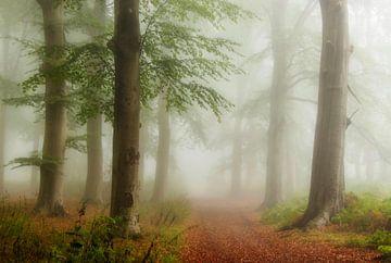 Nebliger Wald von Connie de Graaf
