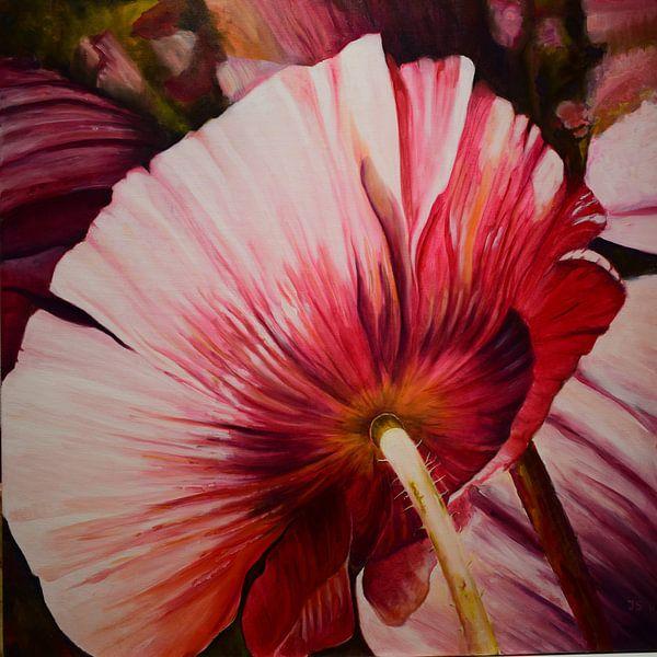 papaver1 roze van Janny Schilderink