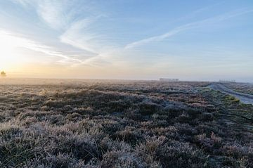Regte heide in de vroege ochtend van MaxDijk Fotografie