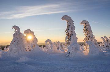 Wintermorgen von
