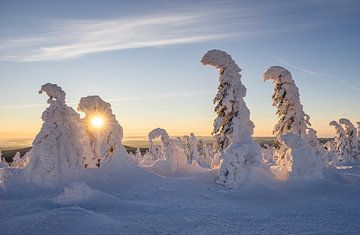 Wintermorgen van Patrice von Collani