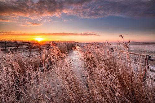 Een prachtige winterse zonsopkomst boven het Nationaal Park Lauwersmeer