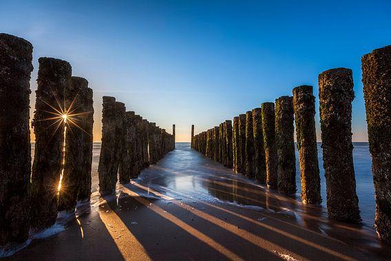 Zeewering in het zonnetje gezet van Ton Drijfhamer
