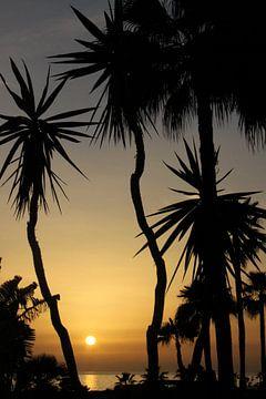 Playa Amadores Gran Canaria van