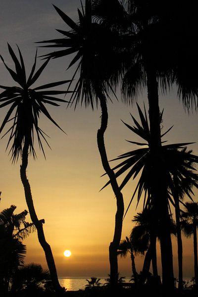 Playa Amadores Gran Canaria van Renate Knapp
