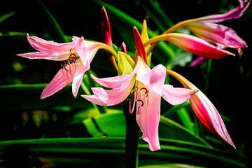 Blumen von Els Hattink